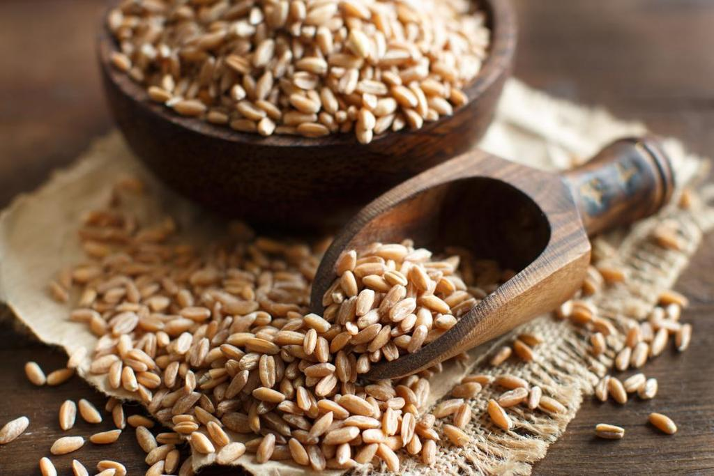 Functional Wheat Proteins Market Progresses for Huge Profits During 2017 2025 The global demand for functional wheat proteins market is high and is projected to grow at a rapid growth rate due to