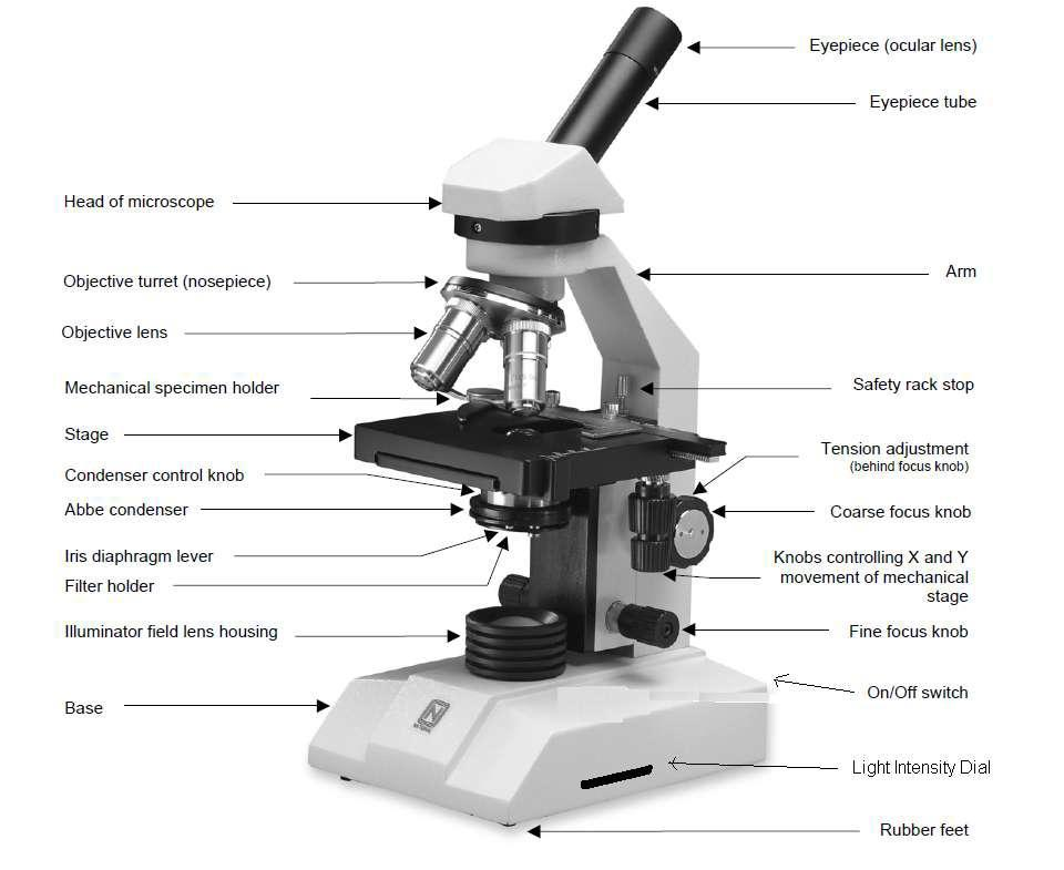 BASIC MICROSCOPE LAYOUT *Always keep the eyepiece facing away from the direction the stage faces.