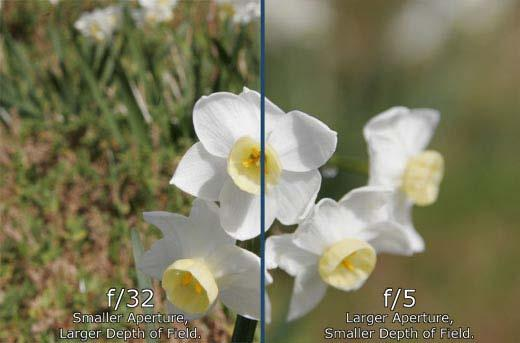 Adjusting aperture also changes your Depth of Field. Depth of field is how much of the area, measuring away from your camera, is in focus.