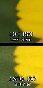 Film Speed (ISO) Film speed (or ISO) is a measurement of how sensitive your camera's sensor (or in the case of a film camera, your camera's film) is to light.