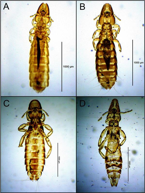 chewing lice world checklist and biological overview special publication 24