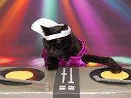 C41 AC is DJ Mad Catter