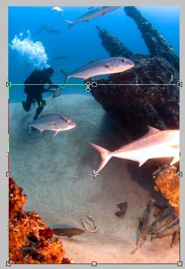 5. Drag the selection handles to set the target area for the recomposed image (Figure 12). Photoshop Elements recomposes the image (Figure 13).