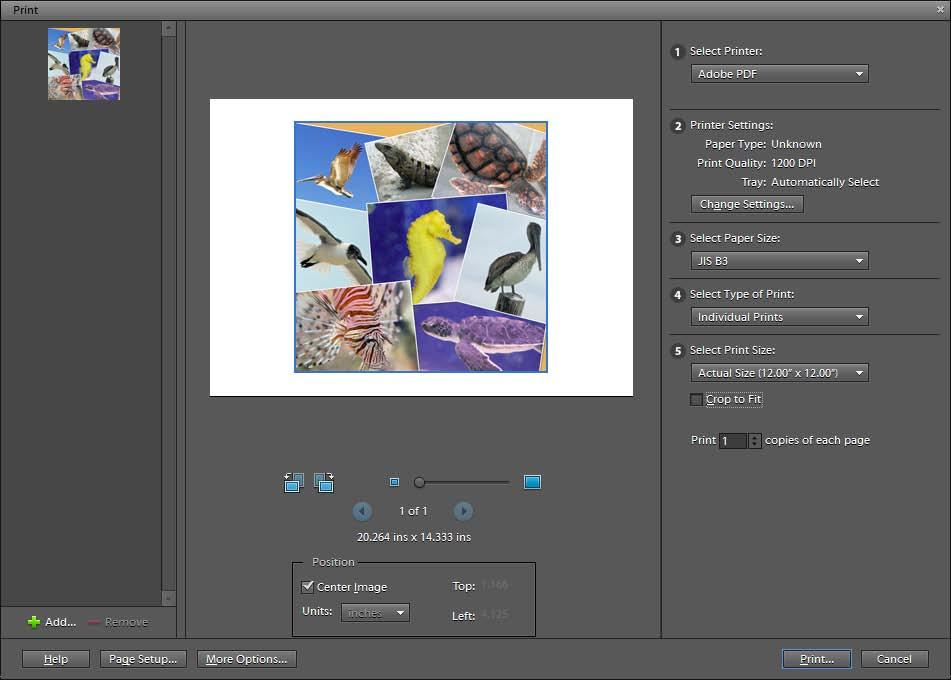 11. When you are satisfied with the collage, click the Print button in the Create panel. The Print dialog box opens (Figure 6). 12.