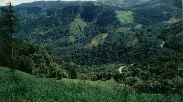 First insights in the ecology and implementation of conservation actions The El Oro Parakeet Buenaventura reserve and surrounding pastures in which can be appreciated the high fragmentation of the