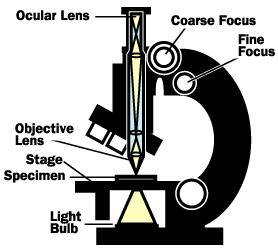 The compound microscope invented around 1590 by Zacharias Janssen provides high magnification for nearby objects.