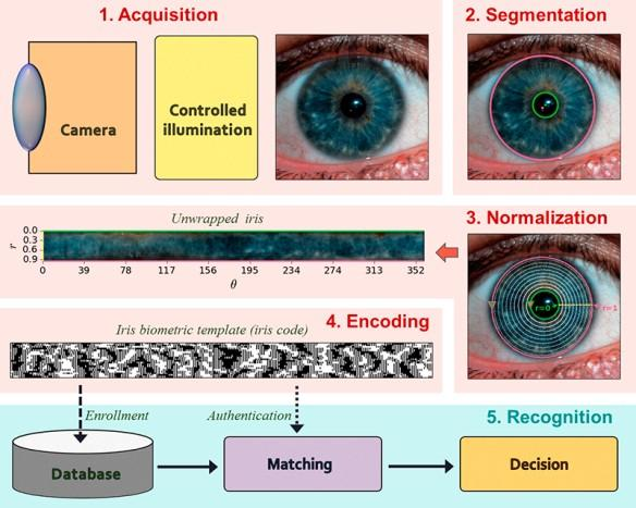Image Segmentation: Applications Machine vision (Industry) Medical imaging Locate tumors and other