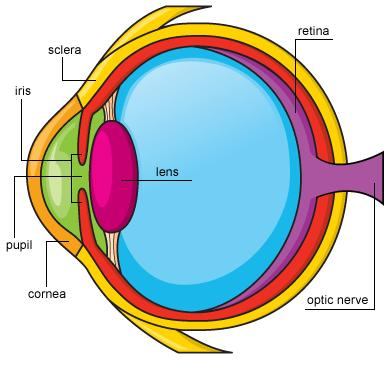 The eye Lenses have a variety of uses in everyday life.