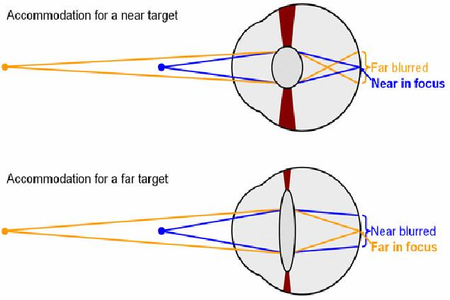 The near point P n of the eye is the closest distance the eye can bring into focus (about 25 cm).