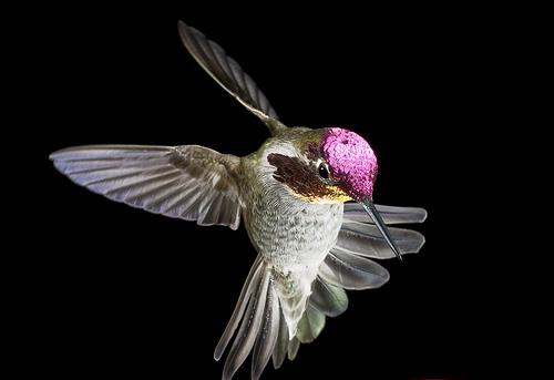 Hummingbird wings requires a shutter speed in excess of 1/10,000 second to stop