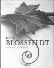 Karl Blossfeldt has done his part in that great examination of the perceptive inventory, which will have an unforeseeable effect on our conception of the world.