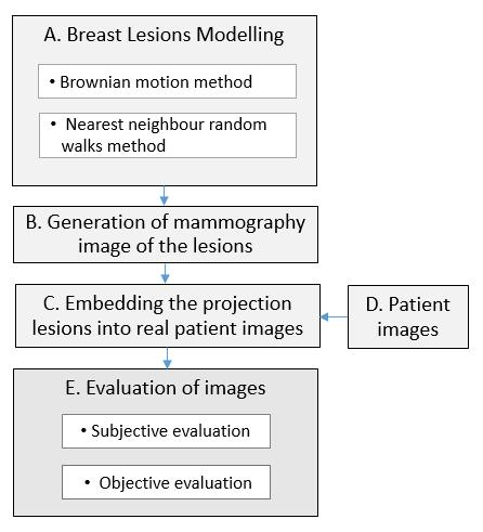 An Approach of Modelling of Breast Lesions Galya Gospodinova Department of Computer Sciences and Automation Technical University of Varna Varna, Bulgaria e-mail: genius2604@abv.