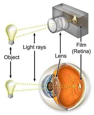 Eyes & Cameras work the Same Way! The Iris and the Aperture controls how much light is let in.