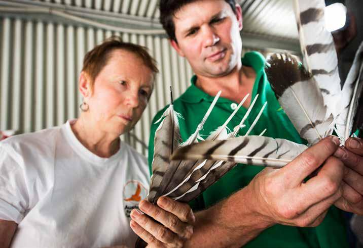Opposite page: Clinic staff prepare to capture a wedge-tailed eagle so it can be examined (top).
