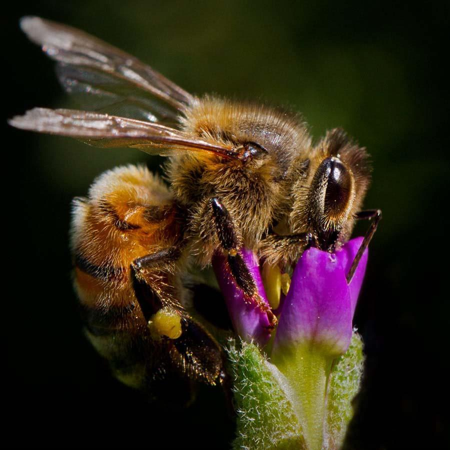 Bees make great subjects