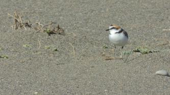 Kentish Plover or White-headed Duck, makes it a place to deserve the maximum possible protection.